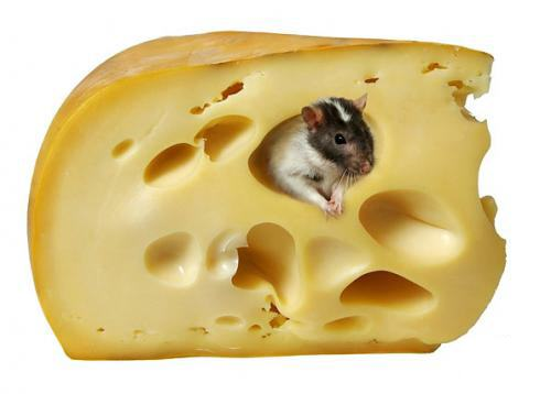 Cheese clipart 6