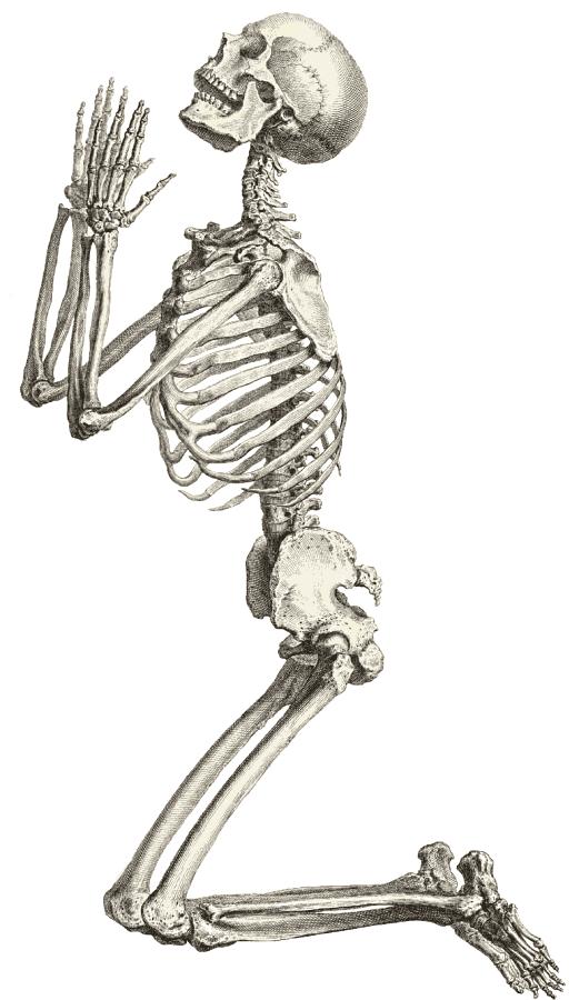 Free skeleton clipart public domain halloween clip art images 2