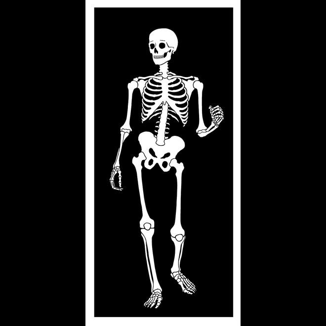 Skeleton skull  clip art