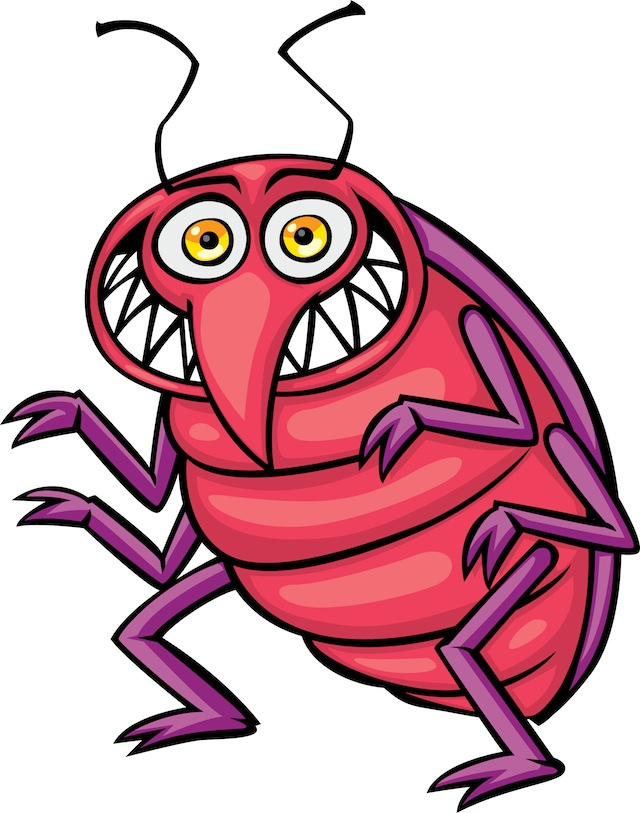 Bed bug photos clipart images  2