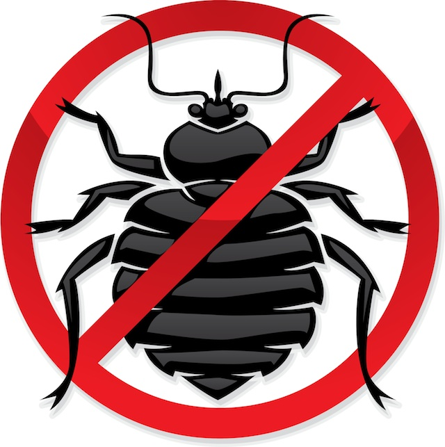 Bed bug photos clipart images  3