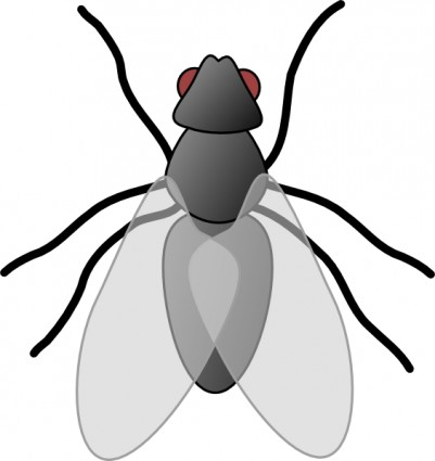Bug cartoon insect clip art free vector for free download about