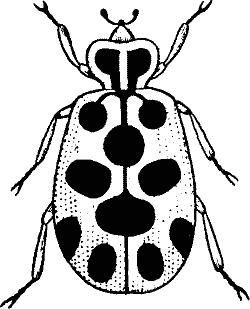 Lady bug clip art clipart