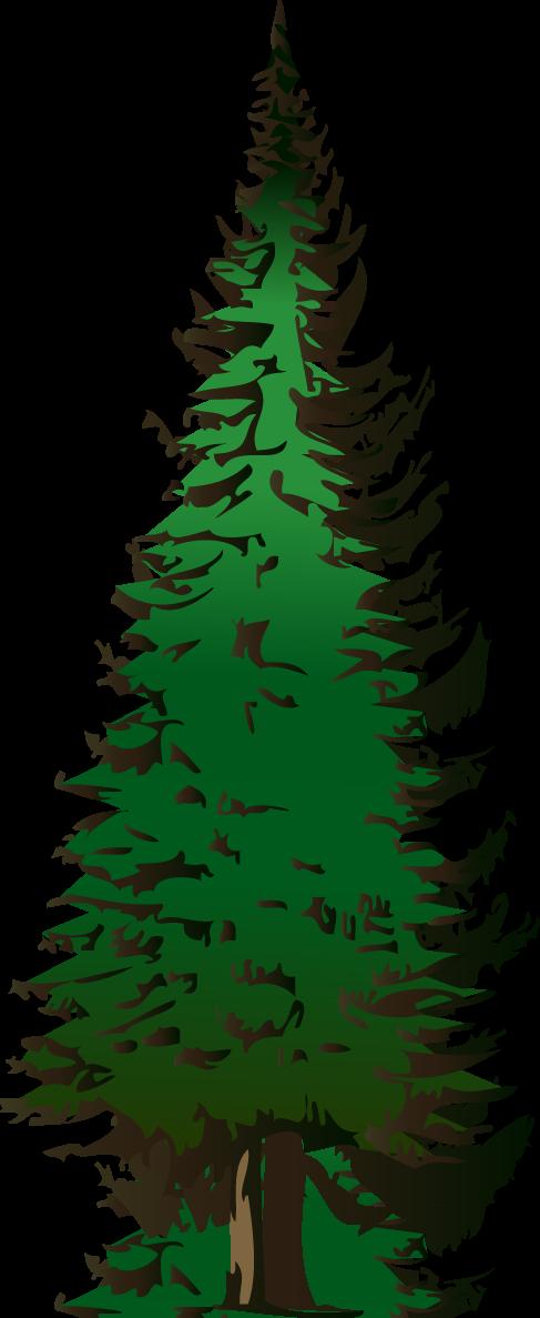 Pine tree clipart 2