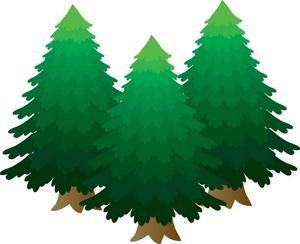 Pine tree clipart 3