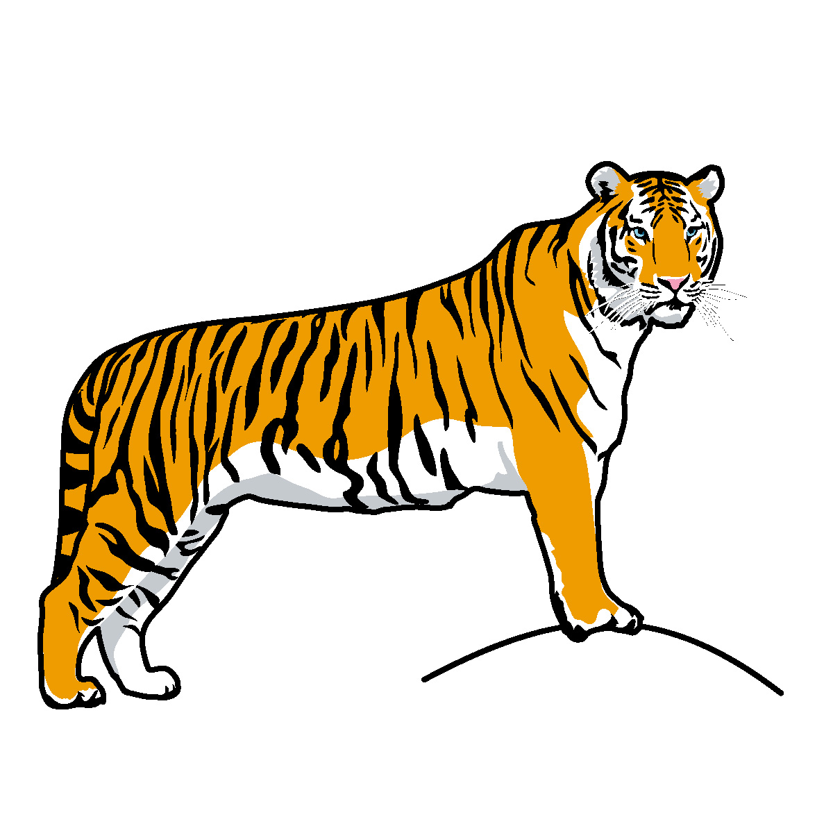 Baby tiger tiger clip clipart