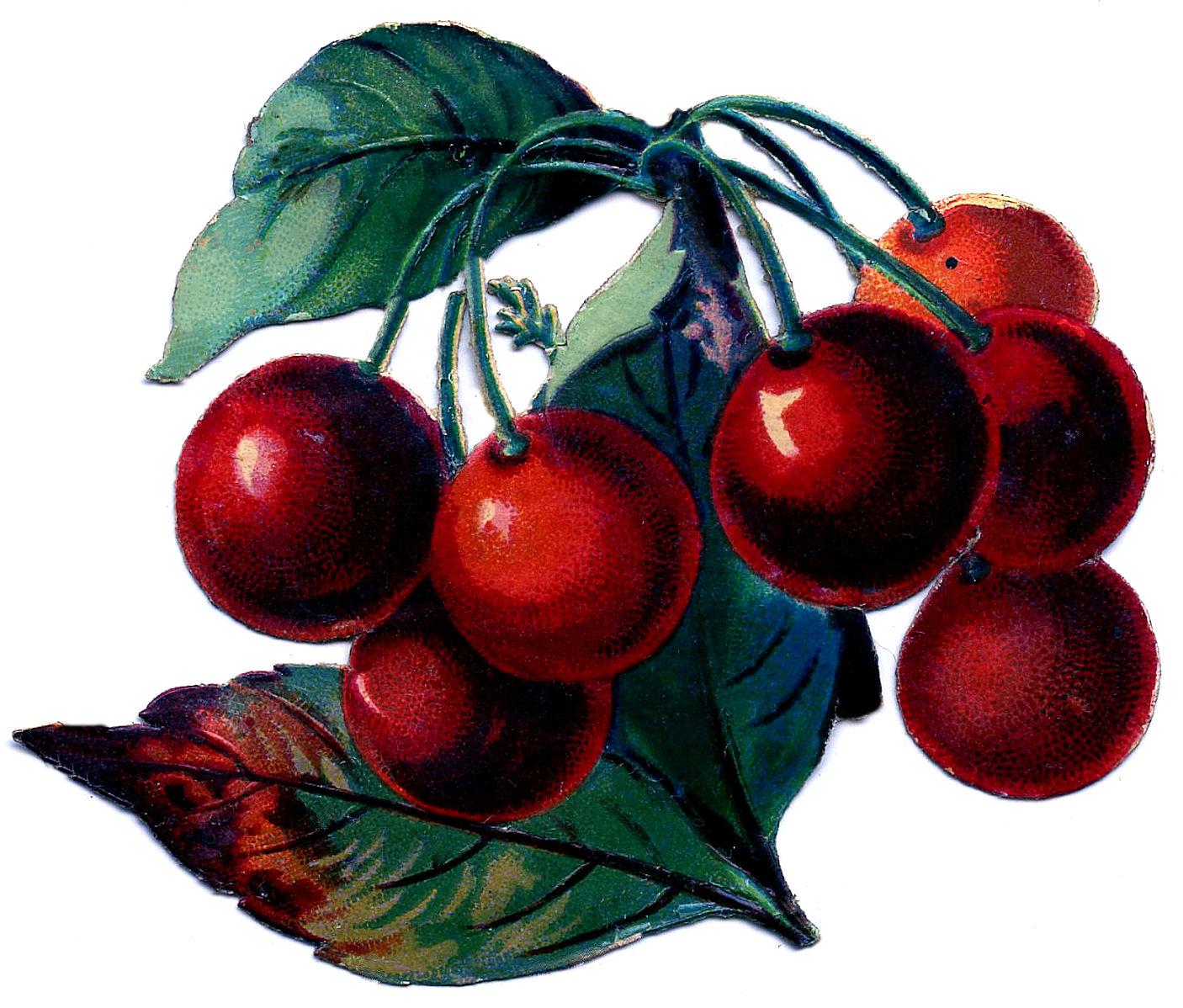Cherry cherries clip art clipart