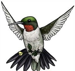 Free hummingbird clipart 2