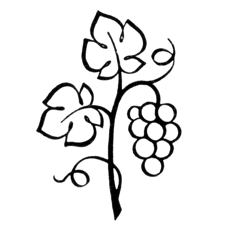 Grapes vine clipart free clipart images 2