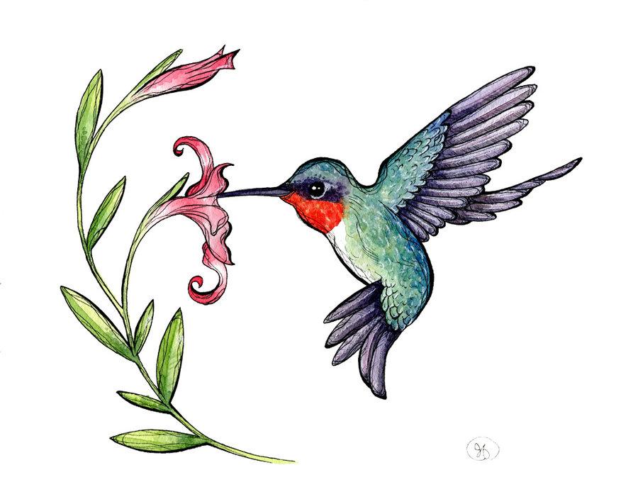 Hummingbird clipart 5