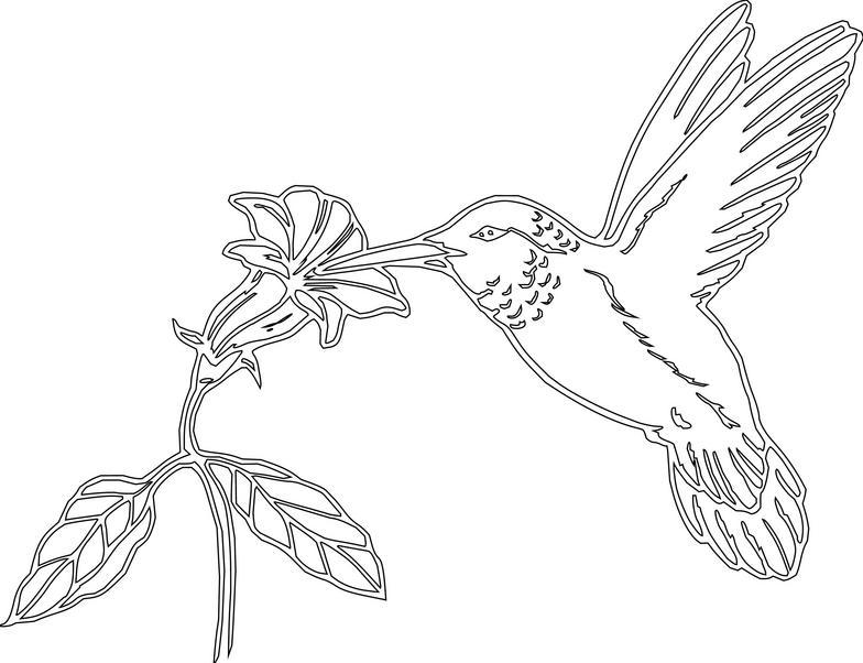 Hummingbird clipart 9