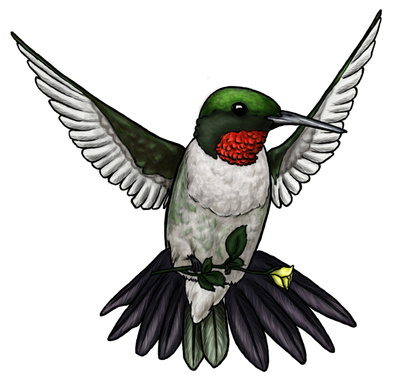 Hummingbird clipart green free clipart images