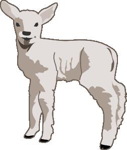 Lamb clip art clipart