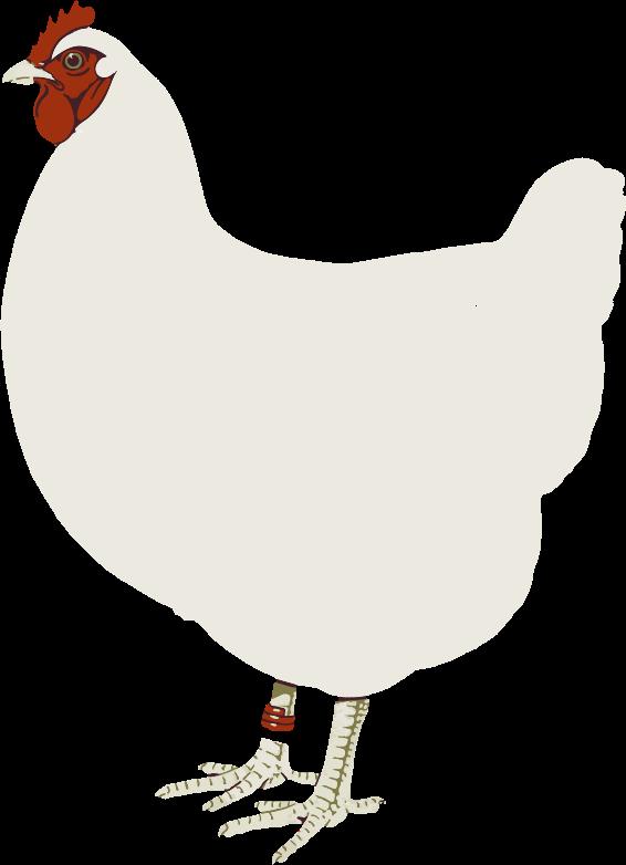 chicken poop clipart - photo #44