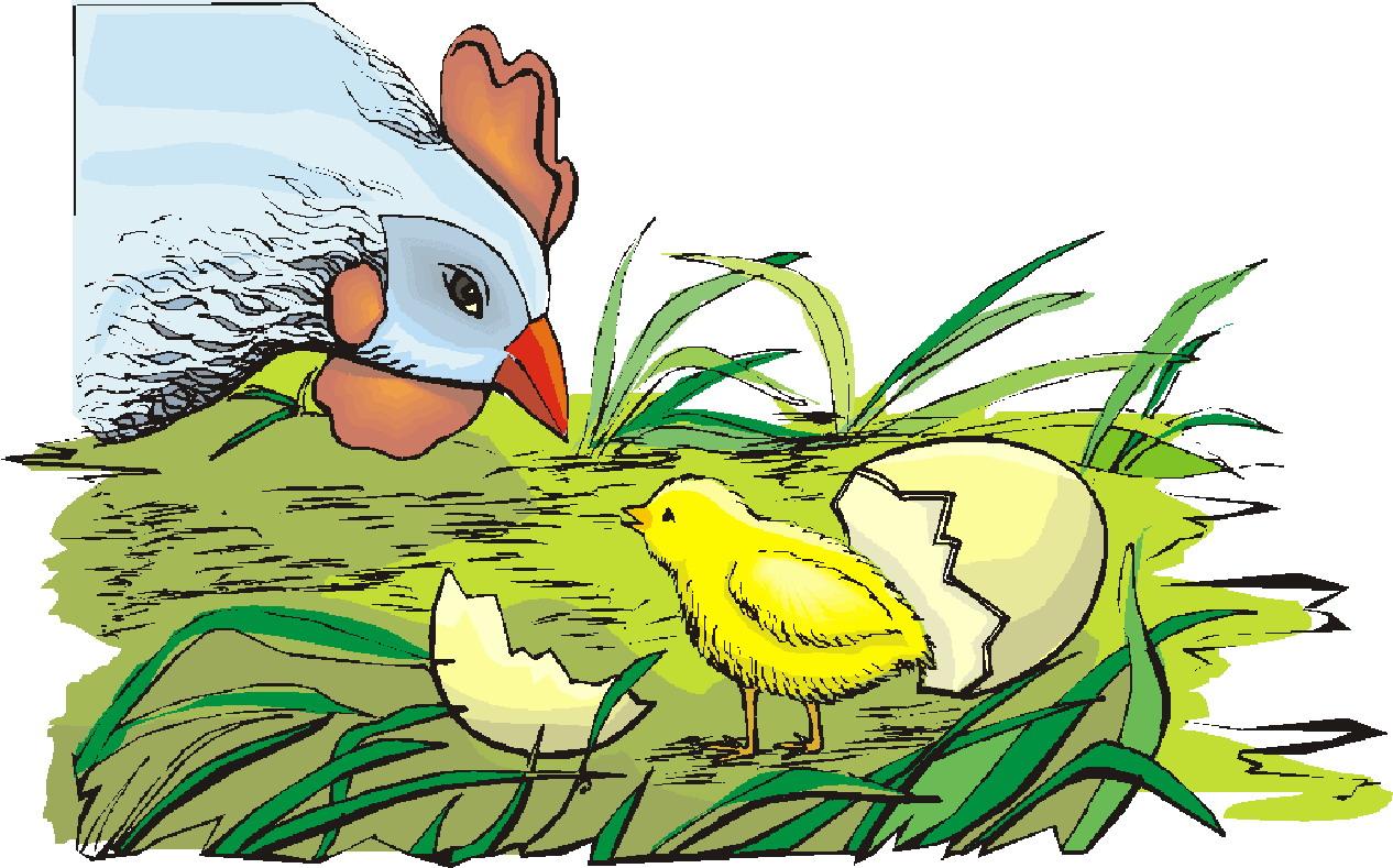 Hen chickens clip art 2