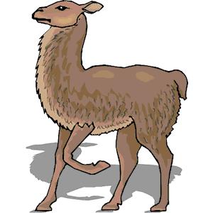 Llama clipart 5