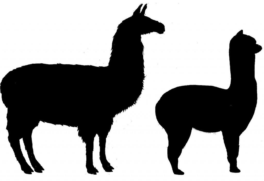 Llama clipart 8 3