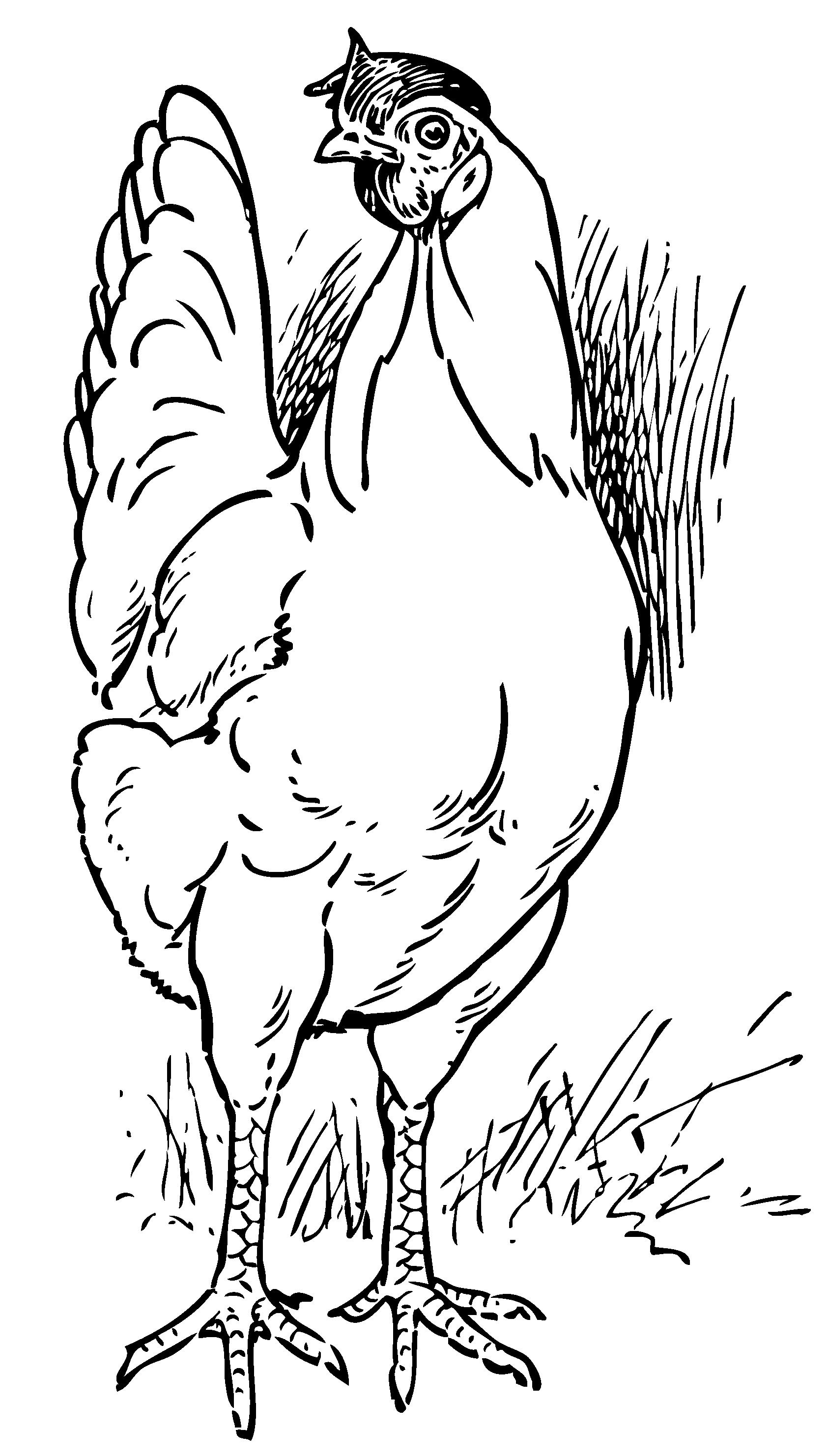 Vintage hen coloring page free clip art
