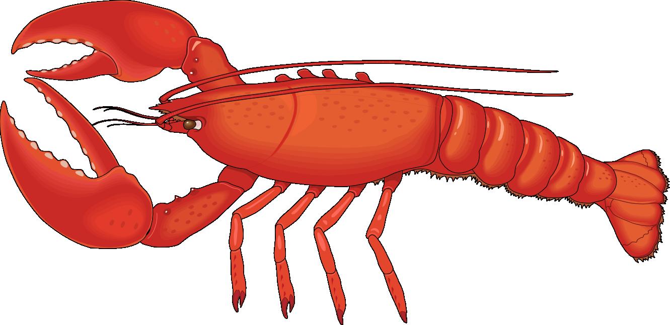 Artfavor lobster 1 free clipart images