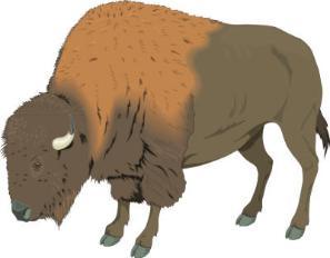 Buffalo clip art 2