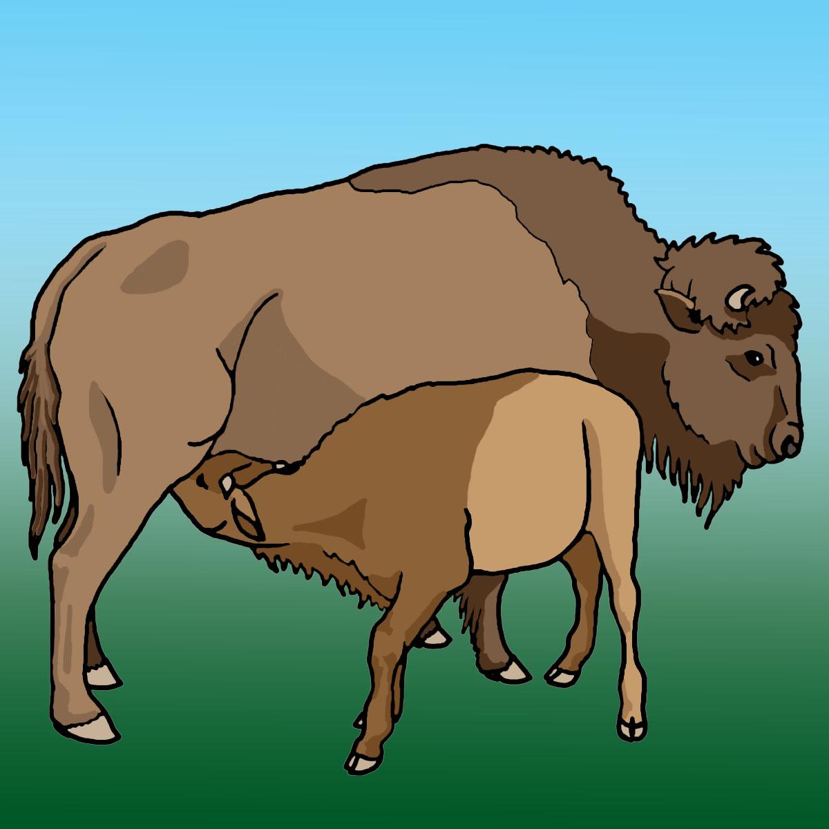 Clip art buffalo calf grayscale
