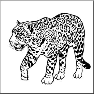 Jaguar clipart 12