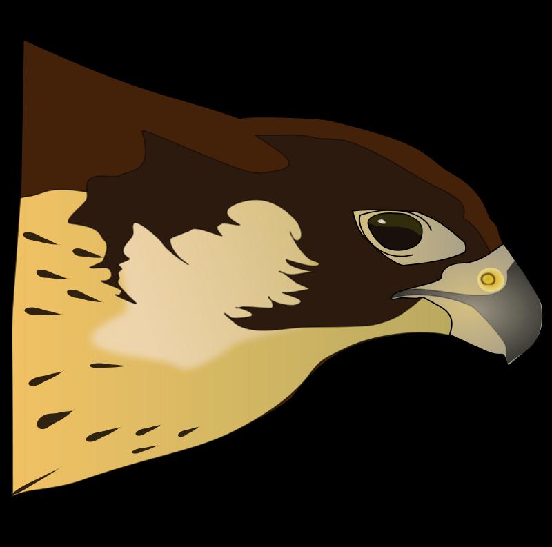 Free hawk clipart