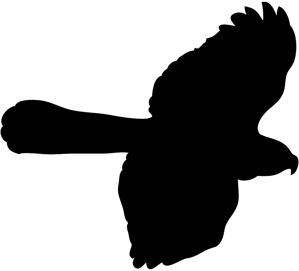 Hawk clip art baby boy clip art in