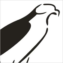 Hawk magnolia clipart