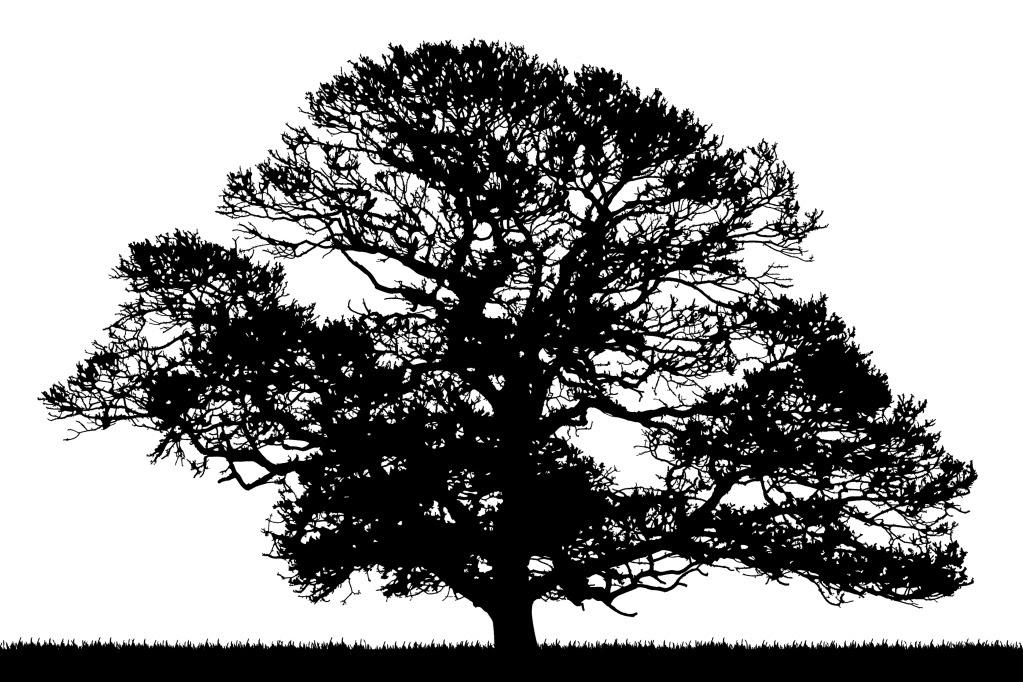 Oak Tree Line Silhouette oak tree silhouette fd tree clip art image ...
