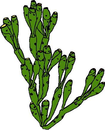 Cactus clip art 14