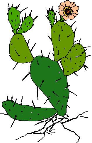 Clip art clip art cactus 4