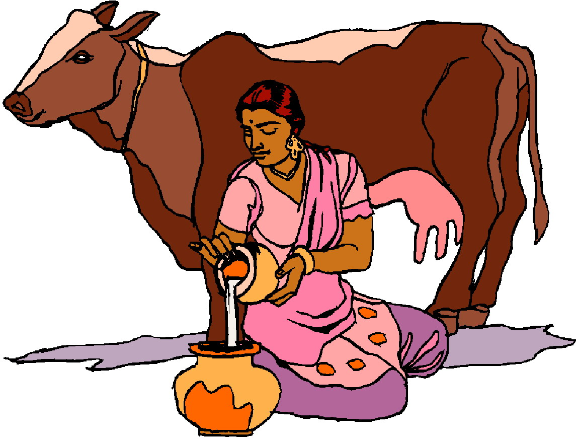 Cows clip art 4