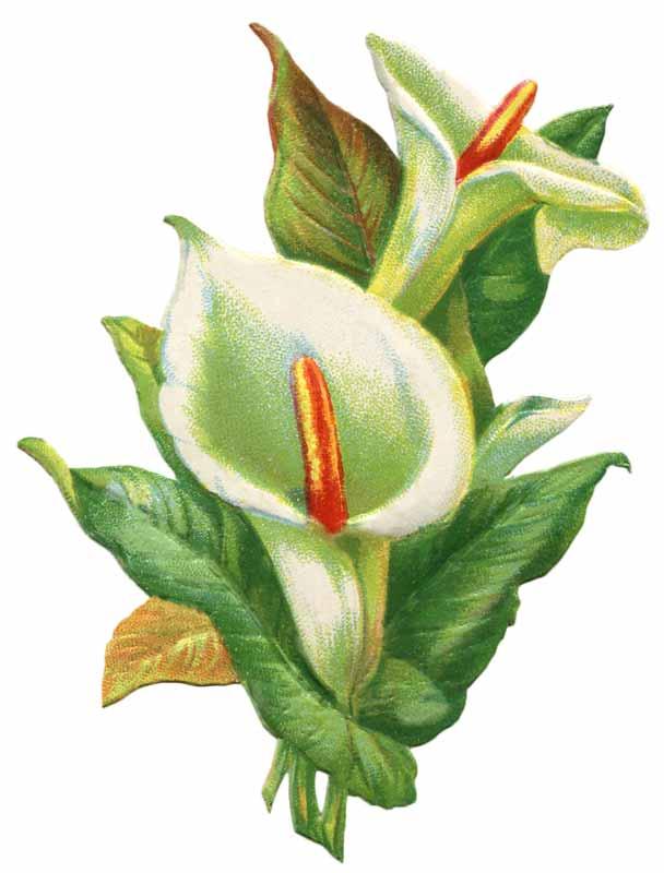 Vintage easter lily clip art vintage fangirl