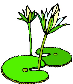 Water lily clip art 2