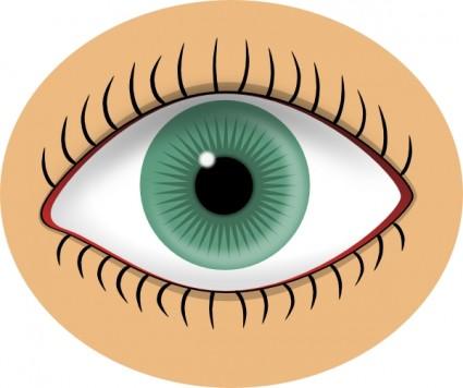 Eyeball eyes clip art free vector in open office drawing svg svg