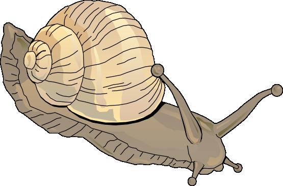 Free snail clip art