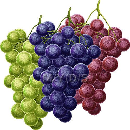 Grapes clipart free clip art