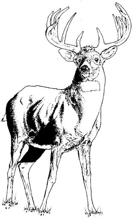Elk clip art 6