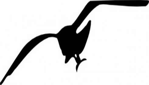 Seagull schools clipart