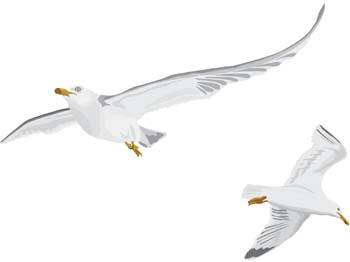 Seagull vector 6 free vector animals vectors deluxevectors clipart 2