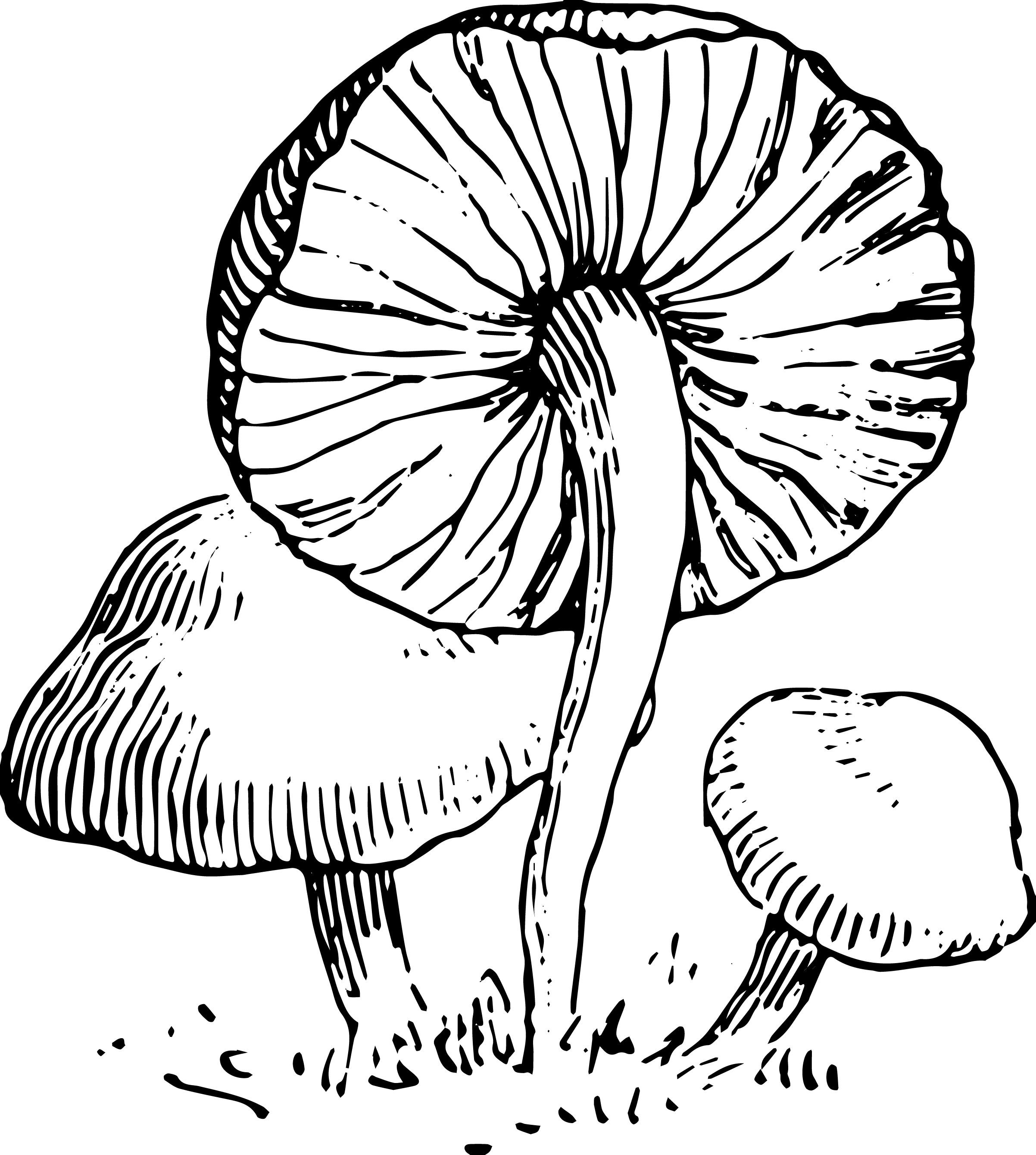 Stock images vintage mushroom clip art oh so nifty vintage