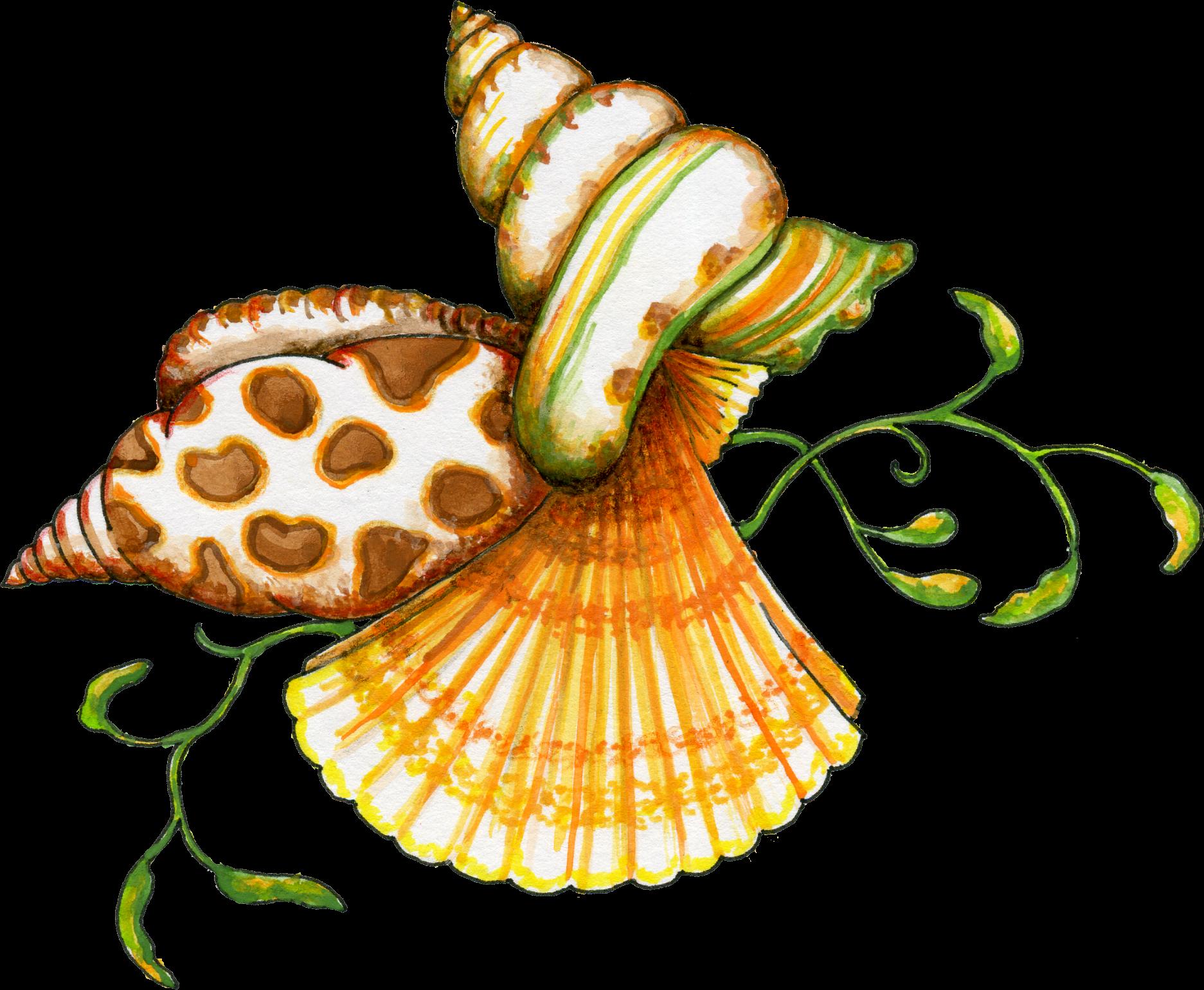 Seashell clipart 2