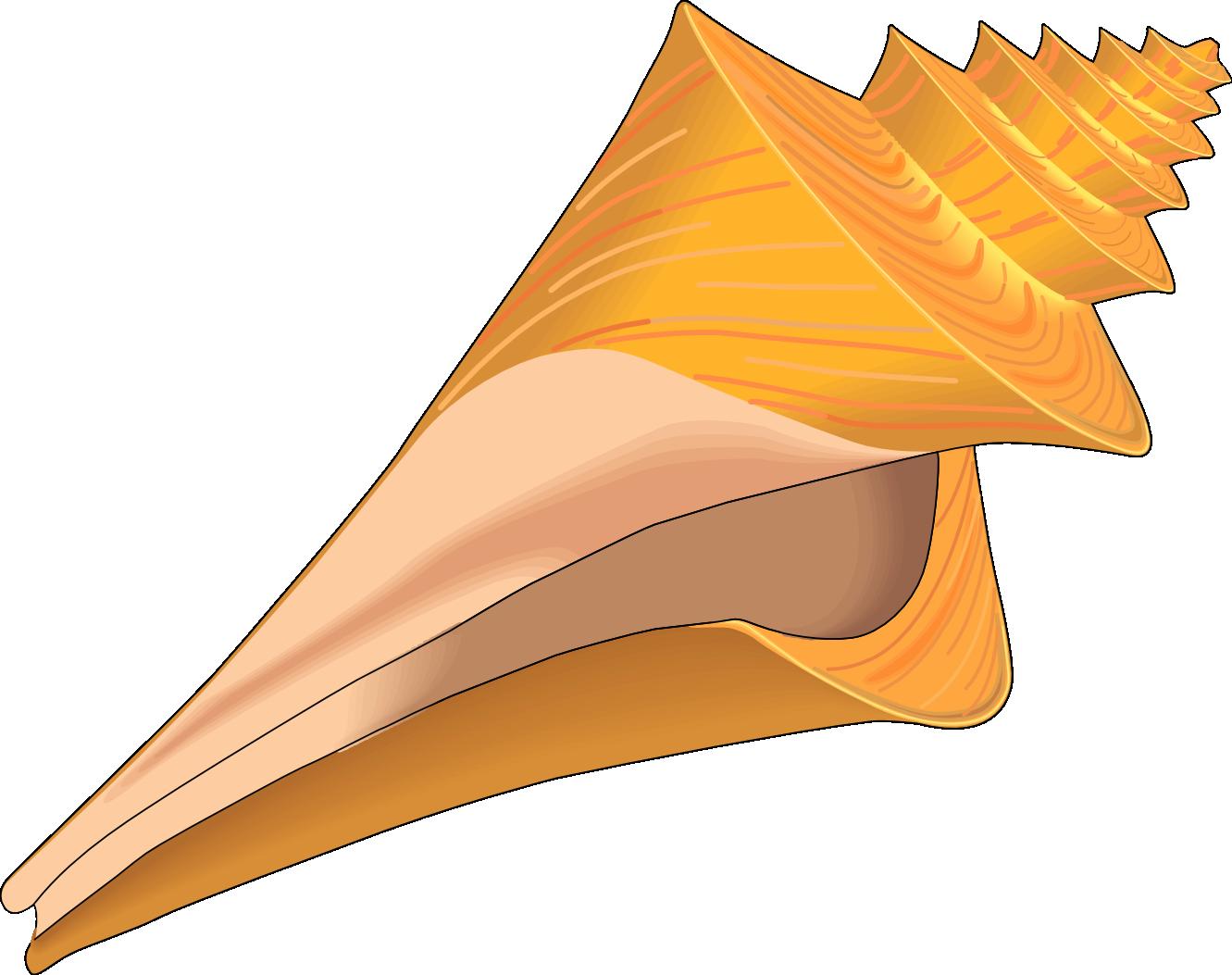 Seashell vector clip art clipart clipart