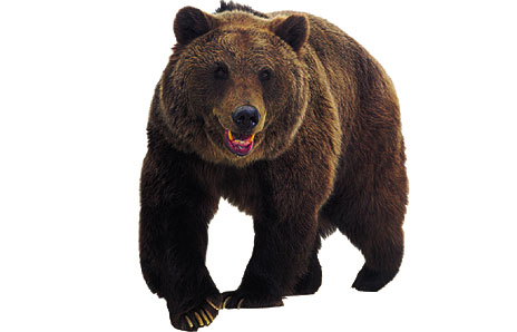 Grizzly bear clipart free clipart images clipartcow