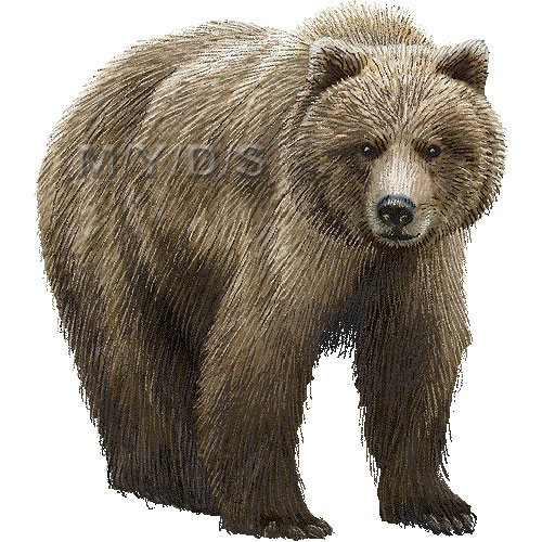 Grizzly bear silvertip bear clipart graphics free clip art