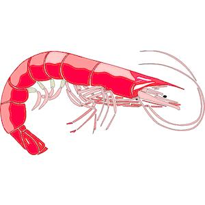 Shrimp day clip art free clipart
