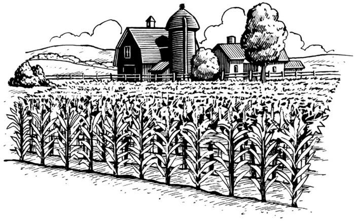 Farming clipart 2