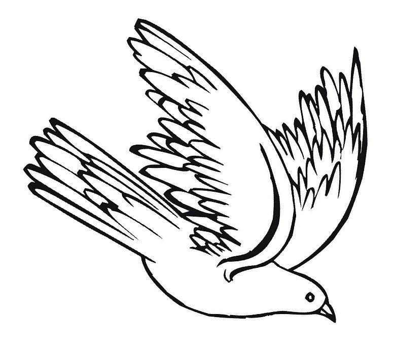 Clip art pigeons danaami2 top 2