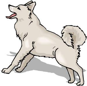 Husky clip art 3